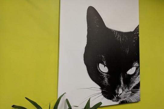 Canvas gleznas druka